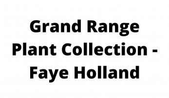 Grand Range Plant Collection - Faye Holland